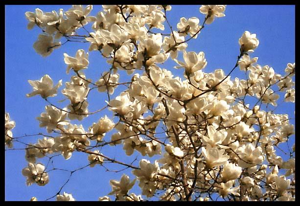 Le Printemps dans Non classé printemps